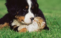 Kitten and puppy on lawn