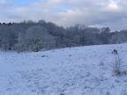 Vinterbilleder fra Borrebakken - kan du finde Fabi?