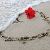 Heart And Flower On Beach Live
