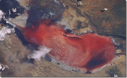 lake-natron-red-algae3
