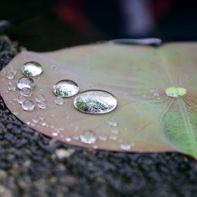 Khoảnh khắc by Lê Thị Thanh  Tâm - Nature Up Close Natural Waterdrops