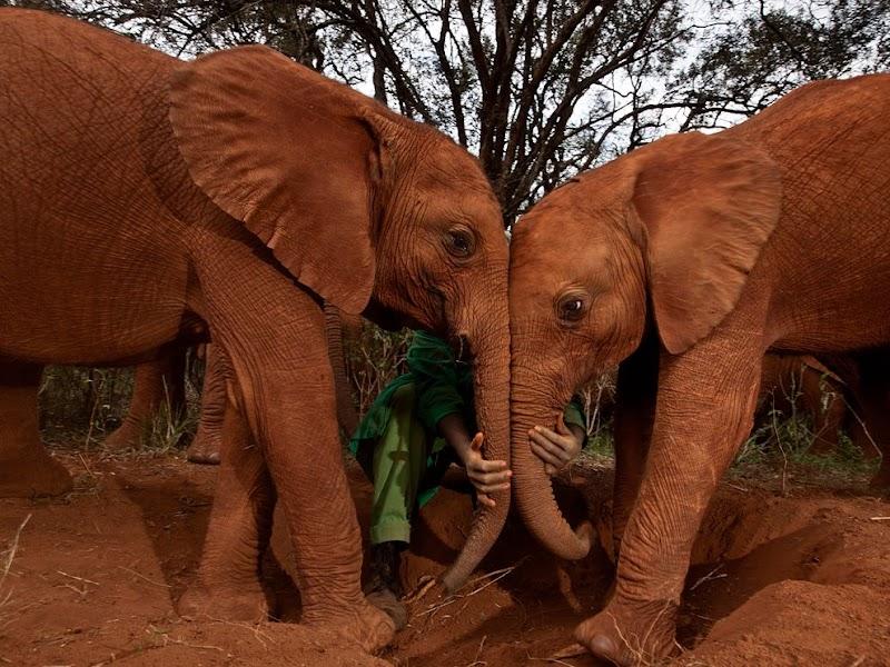 orphan-elephants-kenya_38273_990x742.jpg