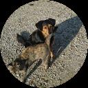 Immagine del profilo di paolo c.