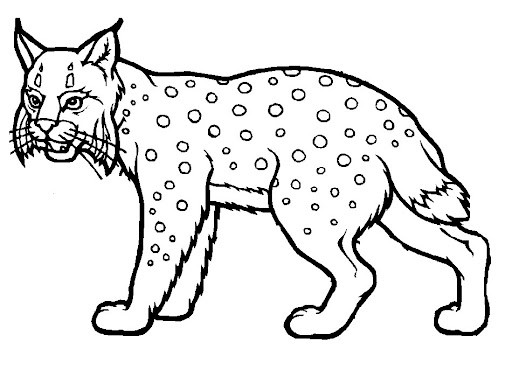 Gato Montes Para Colorear Imagui