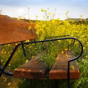 Flower Bench in Spain by Marjorie Speiser - Artistic Objects Furniture ( field, bench, yellow, flowers, spain )