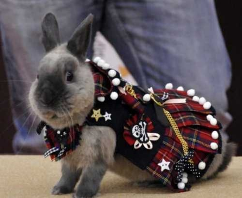 rabbit-fashion-dress-fashion-show
