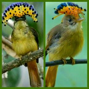 burung unik di dunia
