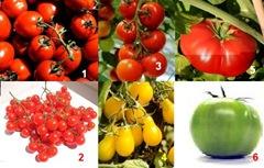 Macam-macam jenis tomat