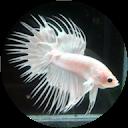 budget aquariums