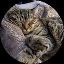 Image Google de Creative Rainbow