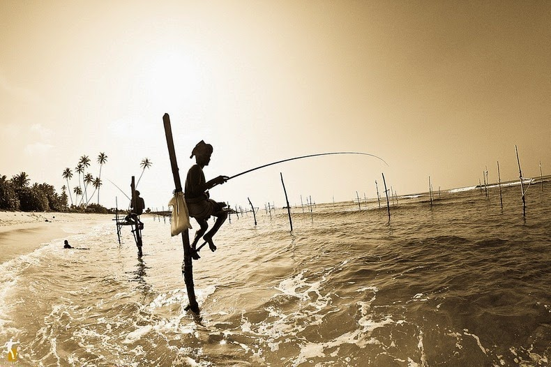 stilt-fishermen-sri-lanka-2