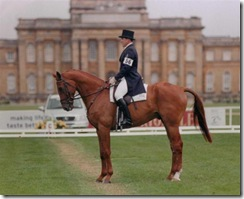David at Blenheim (Small)