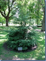 6475 Ottawa 1 Sussex Dr - Rideau Hall - eastern hemlock planted by Their Royal Highnesses The Duke and Duchess of Cambridge (Prince William & Catherine)