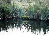 South Island - Milford Sound - Mirror Lake