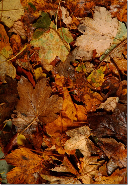 Leaves_006_by_ISOStock