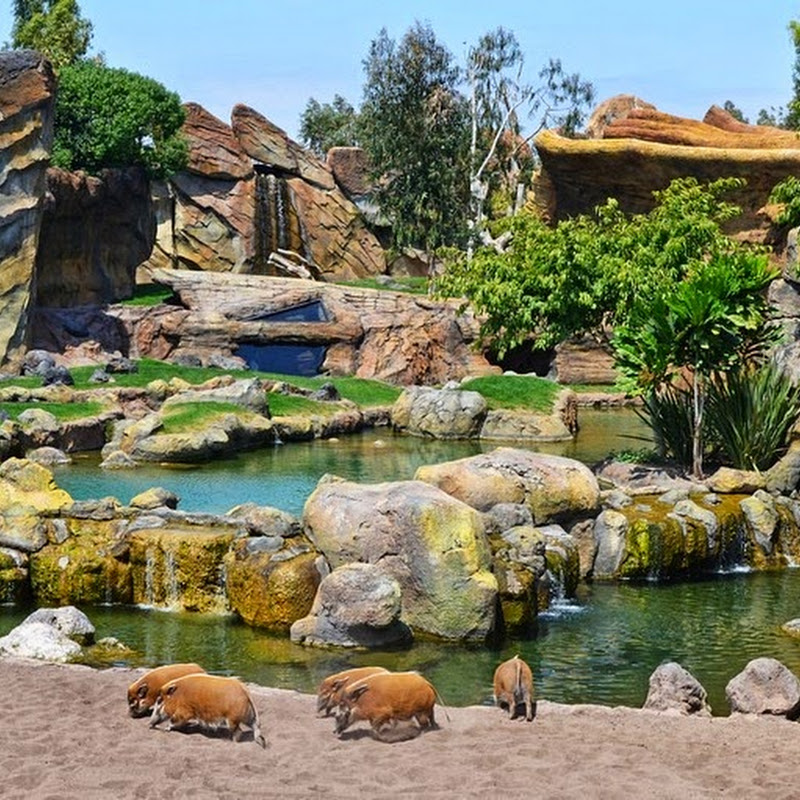Bioparc Valencia: The Immersive Zoo