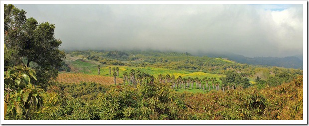 130404_Ojai_avocado_pano2