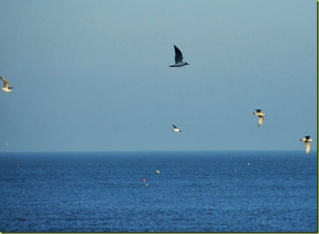 Seagulls at Cromer