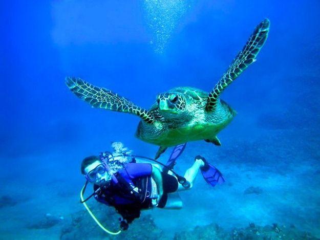 TRR-Turtle1