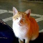 2005-11-24 20-43-00_0010.jpg