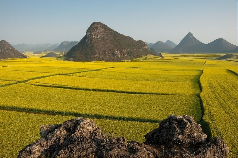 Rapeseed fields in luoping china amusing planet luoping 11 mightylinksfo