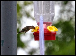 01c3 - birds - hummingbird