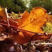 Autumn Leaves Fall-Laura Pyne.jpg