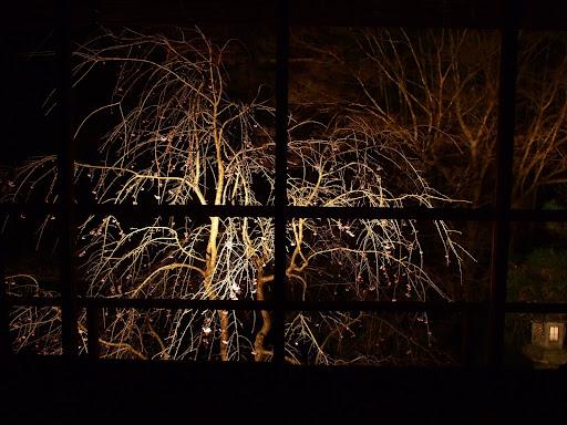 [写真]夜桜