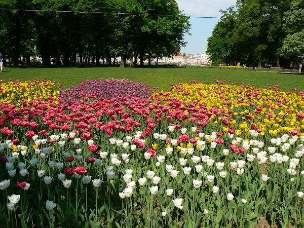 Imagini Rusia: flori la Sankt Petersburg.JPG