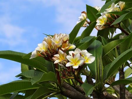 26. Flori Mauritius.JPG