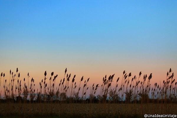 Francia-Camarga-Arles-Aigues-Mortes-12.jpg