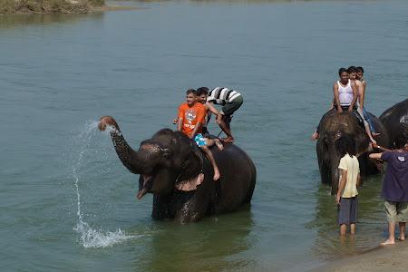Imagini Chitwan: baie cu elefantii