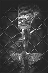 Bird_0082-Edit