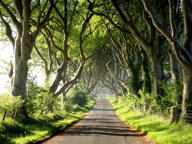 dark-hedges-3