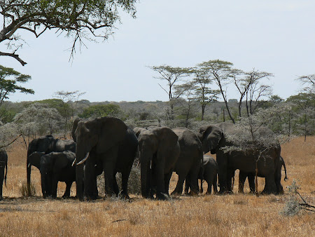 Safari Tanzania: elefanti Serengeti