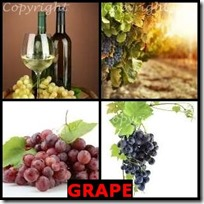 GRAPE- 4 Pics 1 Word Answers 3 Letters