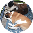 buy here pay here Greeley dealer review by alan schmitz