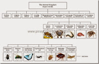 The Arthropods Learning Material (with FREE Files)