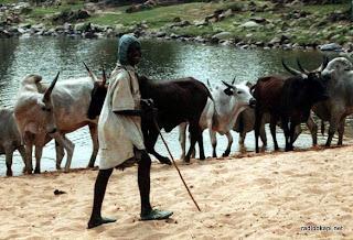 Enfant Mbororo, gardien du troupeau. Photo marinou.skynetblogs.be