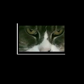 Cat Eyes Visual