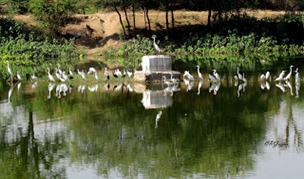 birds at pond