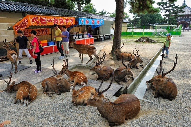 Nara Deer Park Fox Village Cat Island Rabbit Island