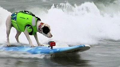 Thi chó lướt sóng để quyên tiền từ thiện