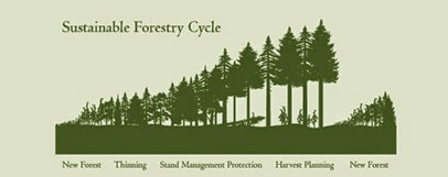 sustainable-forestry-cycle