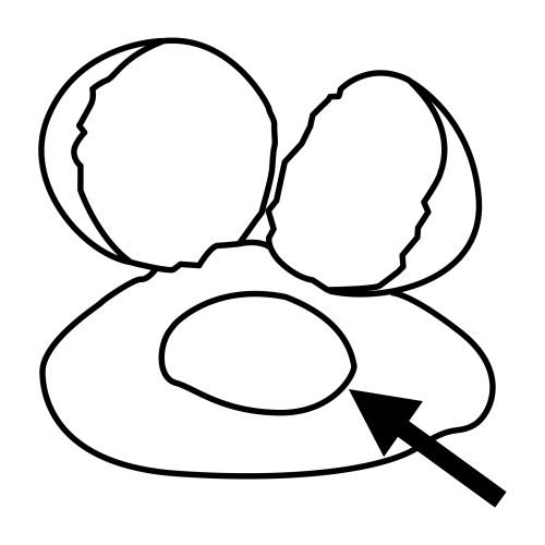 Huevos para colorear niños - Imagui