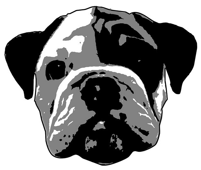 bulldog pumpkin stencil the gallery for gt bulldog pumpkin stencil 6111