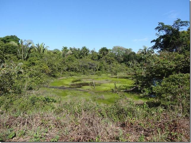 BR-319_Humaita_Manaus_Day_2_DSC05333