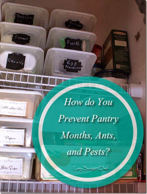 How do You Prevent Pantry Months Antsand Pests