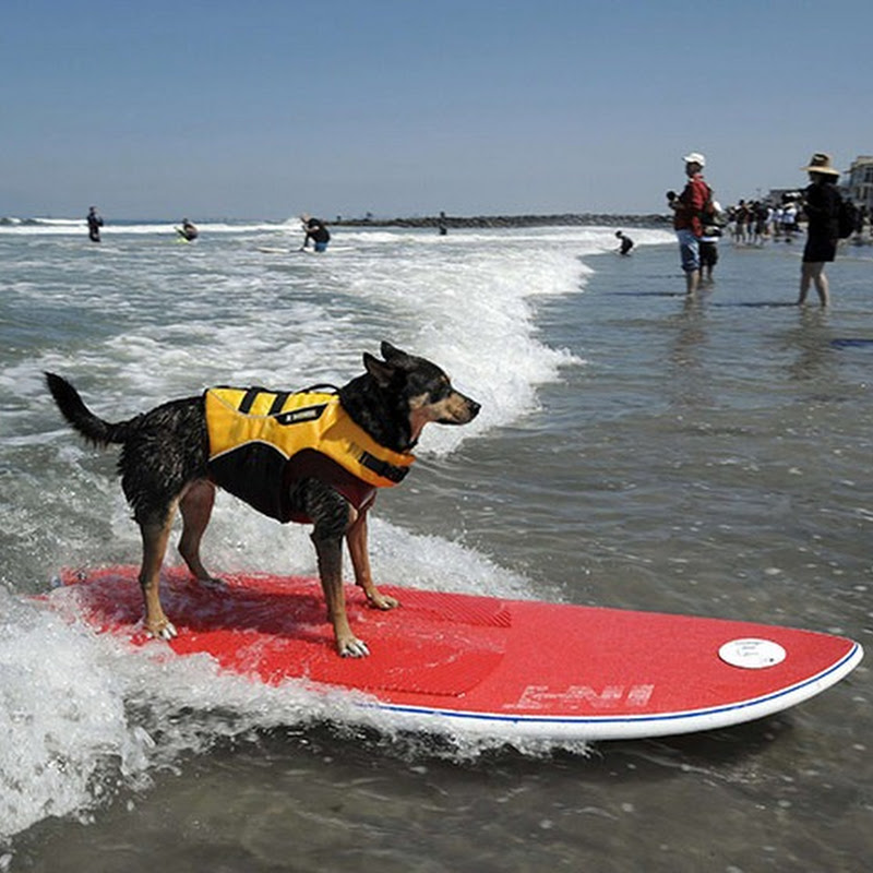 6th Annual Surf Dog Competition, California