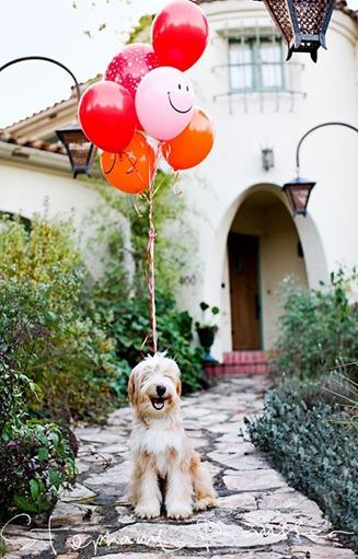 dog balloon